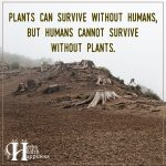 Plants Can Survive Without Humans, But Humans Cannot Survive Without Plants