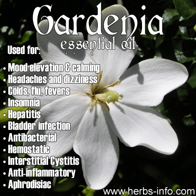 gardenia essential oil uses