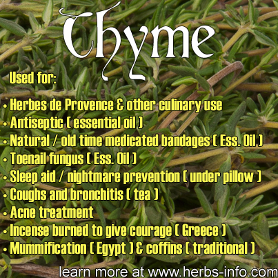 Uses Of Thyme