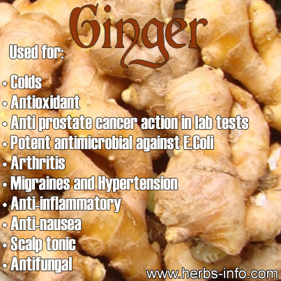 MEDICINE WHEEL: Ginger: 10,000x Stronger Than Chemo (Taxol) in Cancer Research Model Uses-Of-Ginger