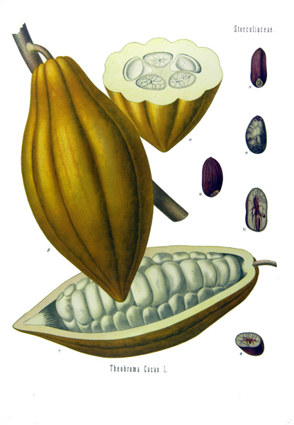 Cacao (Fruit, Seed)