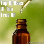Top 10 Uses For Tea Tree Oil