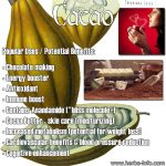 Cacao: Food Of The Gods, Lovers' Gift Or Aphrodisiac Of Emperors?