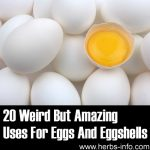 20 Weird But Amazing Uses For Eggs And Eggshells