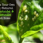 How to Make Your Own All-Natural Insecticides and Pesticides