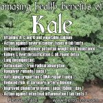 The Amazing Health Benefits Of Kale