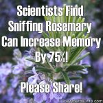 Scientists Find Sniffing Rosemary Can Increase Memory By 75%