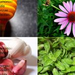 5 Of The Most Highly Regarded Natural Antibiotics