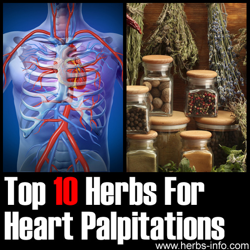 Herbs For Heart Palpitations