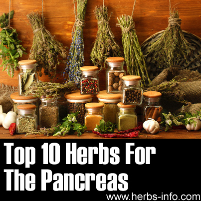 Herbs For The Pancreas